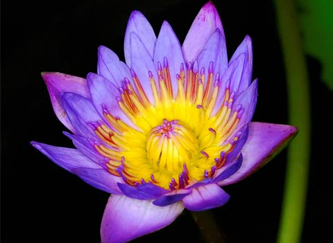 materassi waterlily