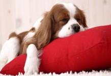 dormire-bene-guanciali-memory